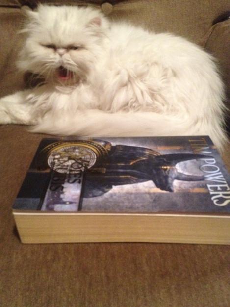 Comme le prouve indiscutablement ma photo, les Voies d'Anubis aura quasiment la même taille que les Pirates de l'Escroc-Griffe, mais les deux romans auront néanmoins des dimensions à celles de Heidi, mon chat persan (merci pour sa collaboration)